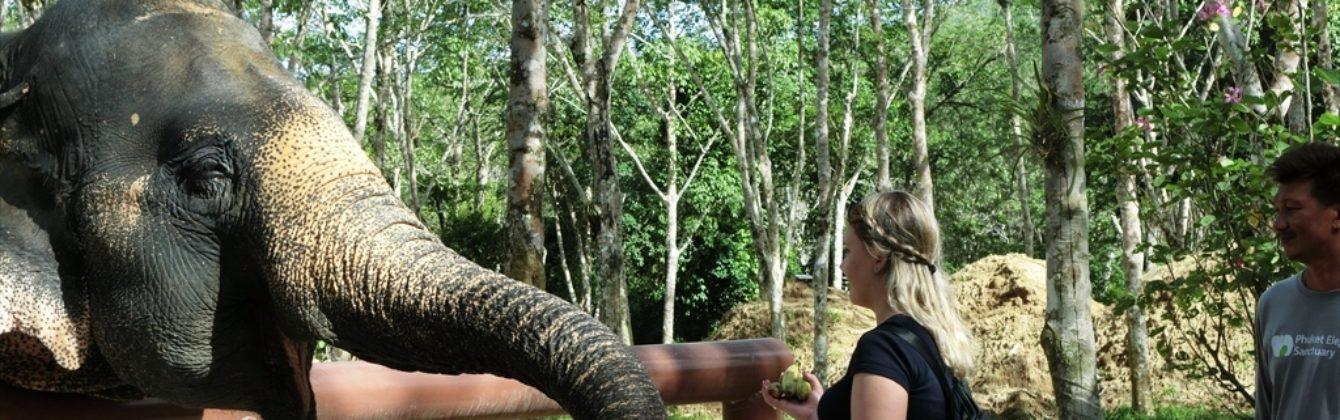 プーケット島・現地情報ブログ(観光情報) | プーケット旅行センター